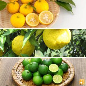 foodex-citrons-yuzu
